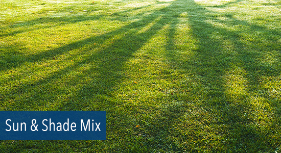 Sun-Shade-Grass-Seed-Mix
